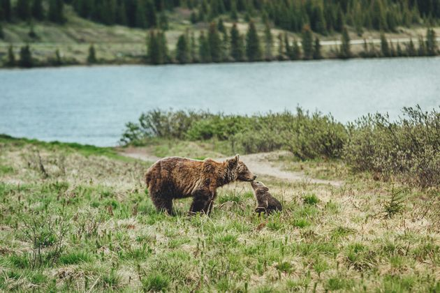 Photographer Ben Waugh caught this sweet moment between a mama and her cub