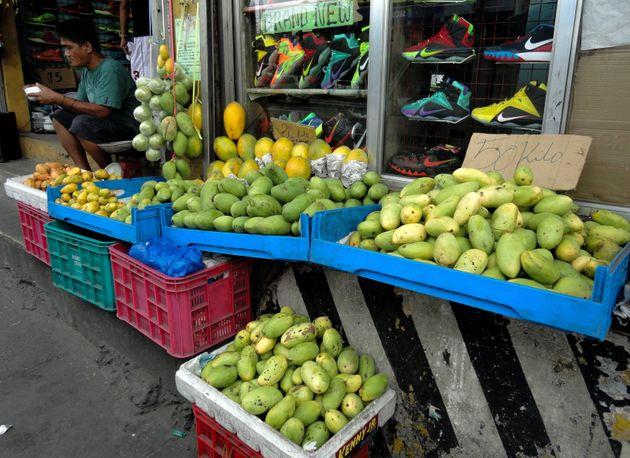 필리핀에서 2,000,000kg의 망고가 남아돌고