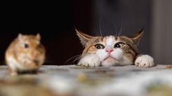 고양이가 자꾸 쥐를 물어온다면 이렇게