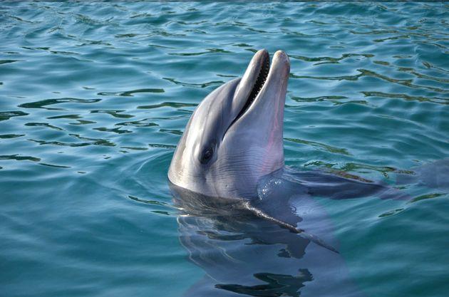 캐나다가 고래, 돌고래 포획 및 사육 금지 법안을