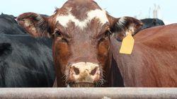 Ερευνα: Το κρέας που θα καταναλώνουμε το 2040 θα προέρχεται από καλλιέργεια