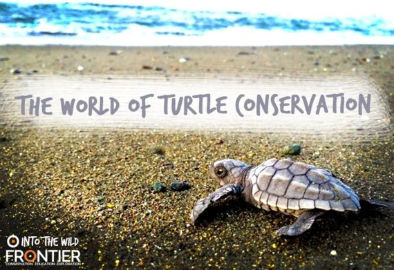 The World of Turtle