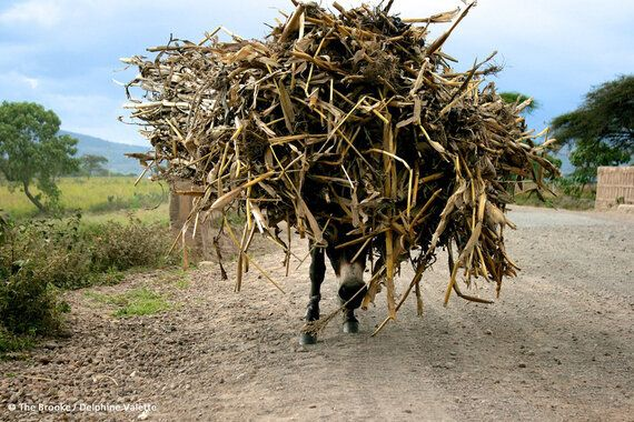 World Food Security - It's Time to Stop Ignoring the 'Beasts of