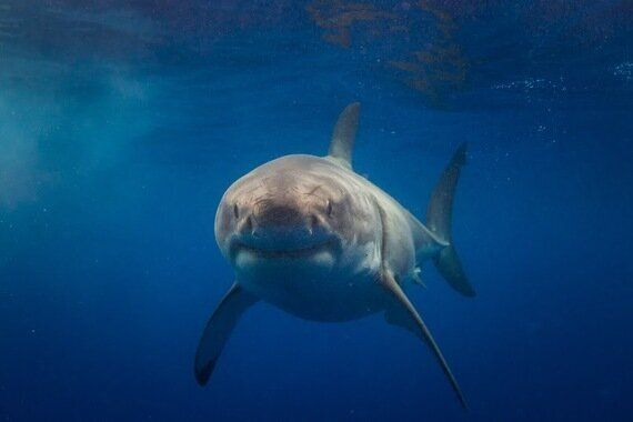 Swimming With Sharks - Who Wants to Join