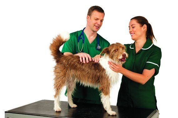 All Dogs in the UK Must Now Be Microchipped: Make Sure You're Not Breaking the