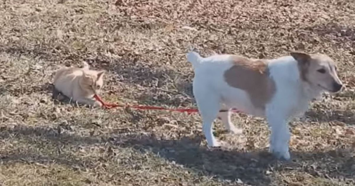 Cat Refuses To Let Go Of Dog U0026 39 S Lead
