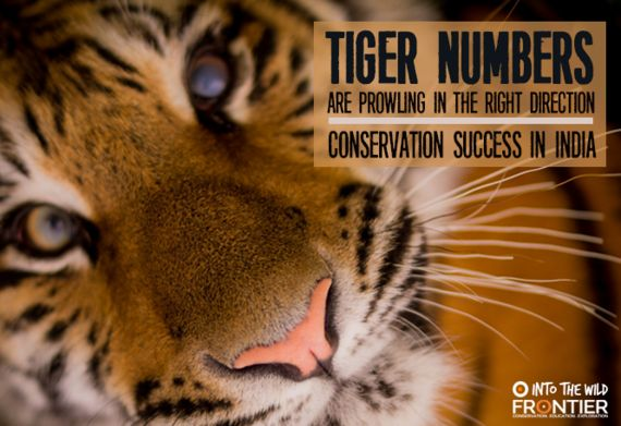 Tiger Numbers Prowling in the Right