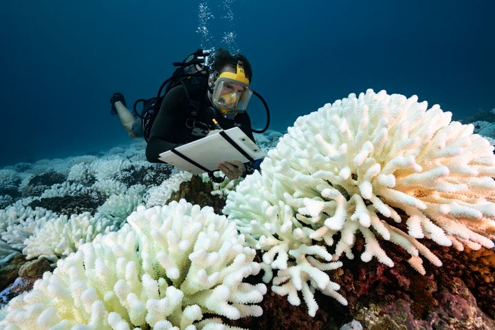 A diver checks on a bleached coral reef in French Polynesia in May 2019.