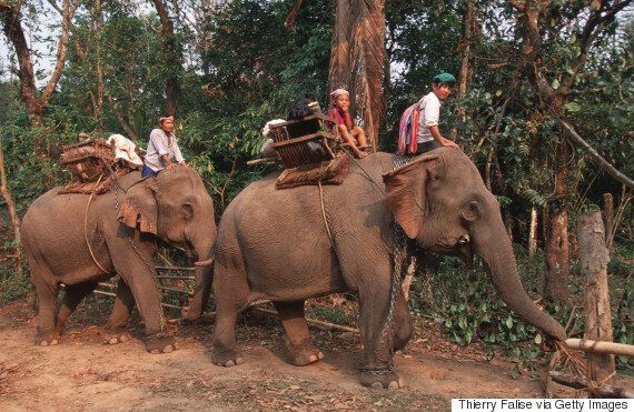 Elephant Ride Tourist Death In Thailand Prompts Call From World Animal Protection To Cease 'Cruel'