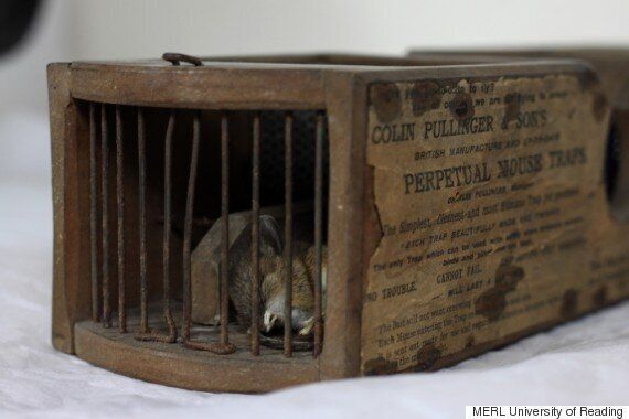 Museum Of English Rural Life Baffled As 150-Year-Old Mousetrap Snares