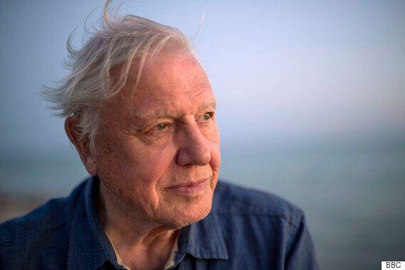 David Attenborough To Celebrate 90th Birthday With Special BBC Retrospective 'Inspiring Attenborough:...
