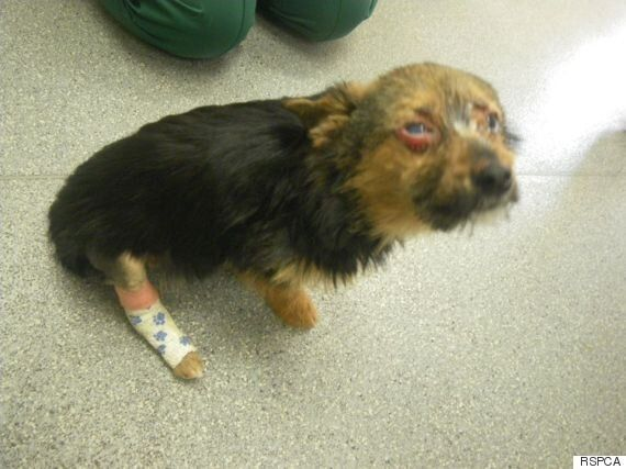 'Justice' For Chunky Petition Receives Thousands Of Supporters After Puppy Is Tortured In Margate,