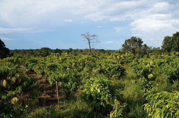 Time for Business to Act on Climate Change - And Agroforestry Is Part of the