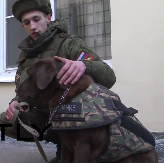 Paris Attacks: Russian Company Makes Dog Armour After French Police Dog Diesel Killed On