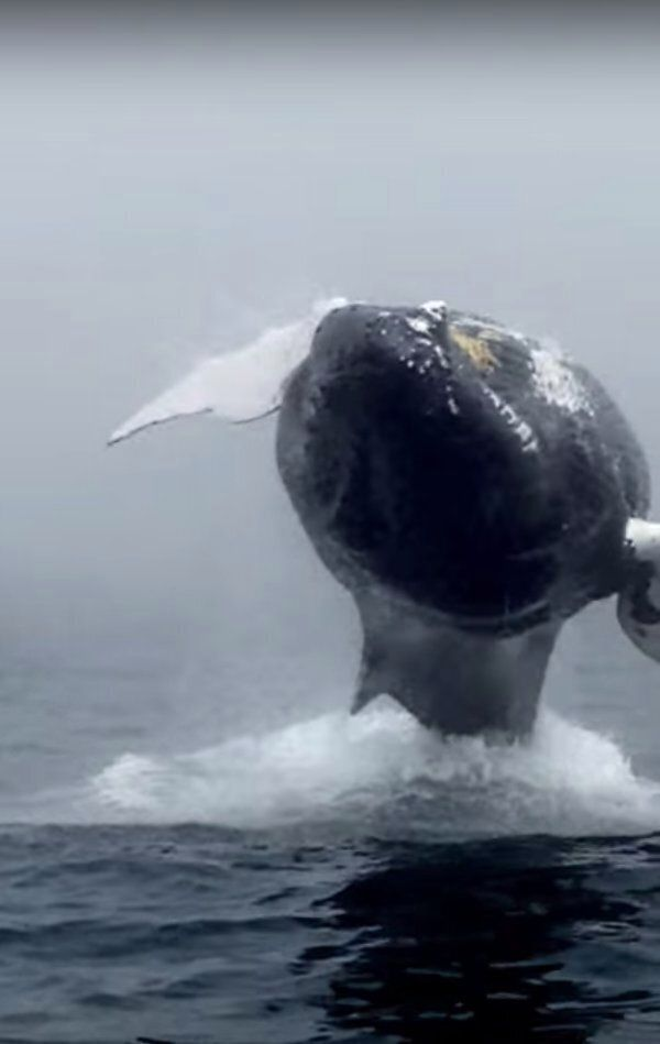 The Incredible Moment A Humpback Whale Stunned Tourists With A Spectacular