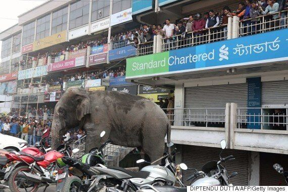 Elephant Tramples Cars And Damages Buildings In Indian Village As Crowds Look