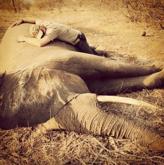 Prince Harry's Pictures With Sedated Elephants And Dead Rhinos Show The Threat Of Poaching To South Africa's