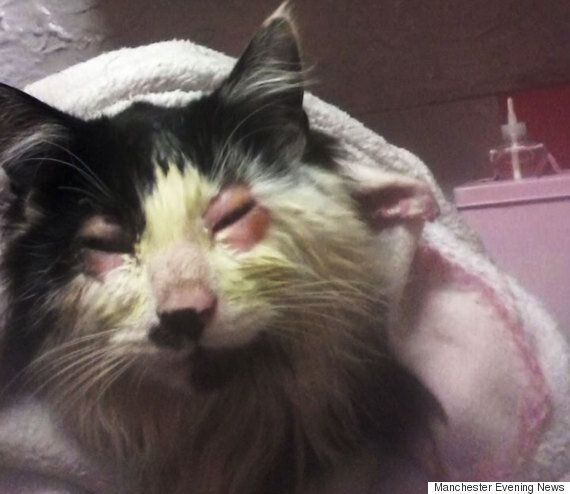 Kitten's Eyes Glued Shut In Manchester Prompt RSPCA And Peta To Appeal For