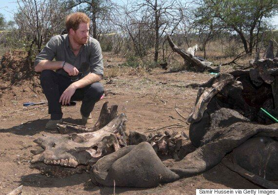 Prince William Has Sparked Breakthrough In China's Stance On Tackling Illegal Trade In Ivory And Rhino...