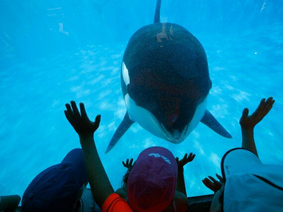Former SeaWorld Worker Says Orcas 'Lost Skin' From Abusive