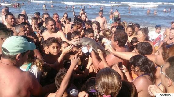 Dolphin Dies After Being Lifted From Water By Tourists And Paraded On Argentine Beach For