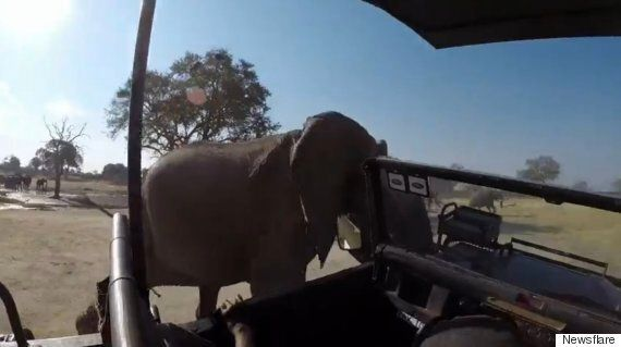 African Elephant Attacks Safari Truck During Fit Of Rage In Hwange