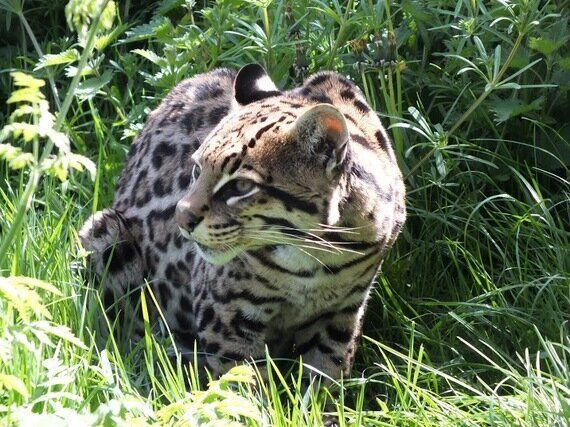 Exotic Pets - Not Just For