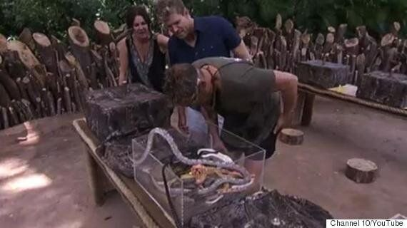 Shane Warne Bitten By Anaconda On Aussie Version Of 'I'm A Celebrity... Get Me Out Of