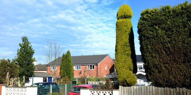 Penis-Shaped Tree Turns Heads In