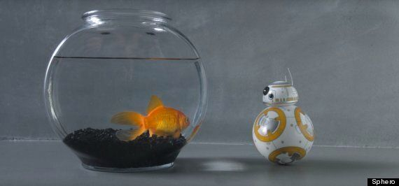 Star Wars BB-8 Toy Is Every Childhood Dream Come