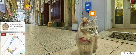 Google Street View For Cats? Japan Pilots Unique New Online