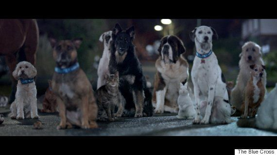 Baxter The Dog Sings 'I Will Survive' In Touching Advert For The Blue