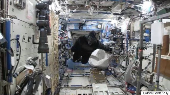 Astronaut Scott Kelly Plays Gorilla Suit Prank On Tim Peake In Celebration Of His Year In Space Aboard