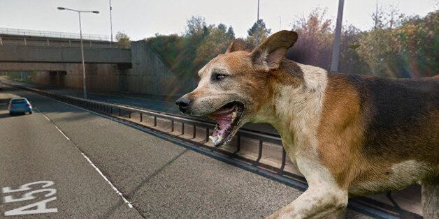 North Wales Police Deliberately Run Over Dog, Prompting Fierce Debate Over Animal