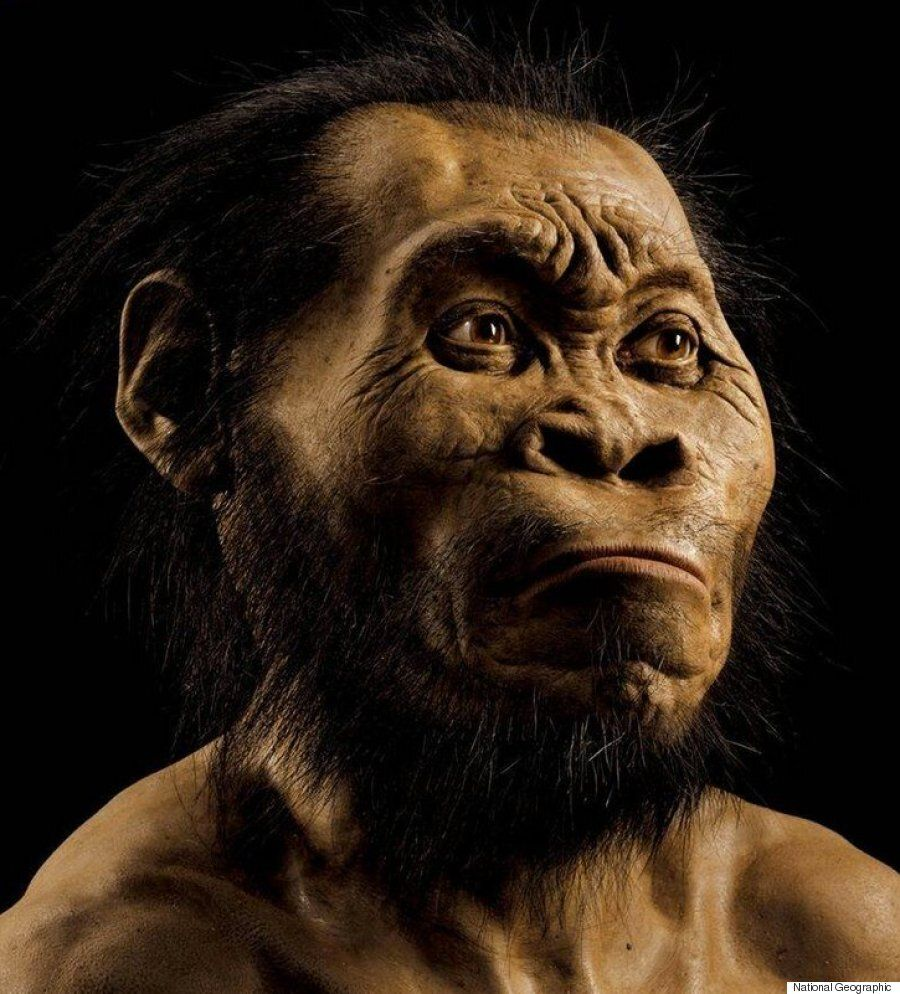 Homo Naledi: New Species Of Ancient Human Discovered In South African