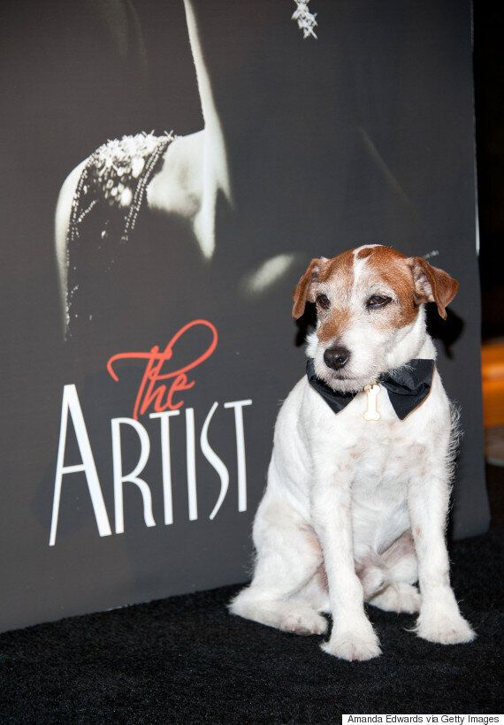 Oscars 2016: Uggie The Dog Snubbed From Academy Awards 'In Memoriam' Tributes, And Twitter Is Not