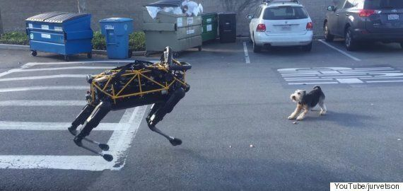 Watch Boston Dynamics' 'Spot' Robot Dog Meet A Real Dog For The First
