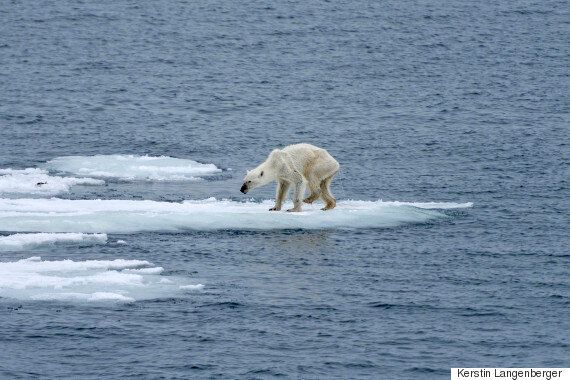 Photographer Links Heartbreaking Image Of Polar Bear To Climate Change And Post Goes Viral On