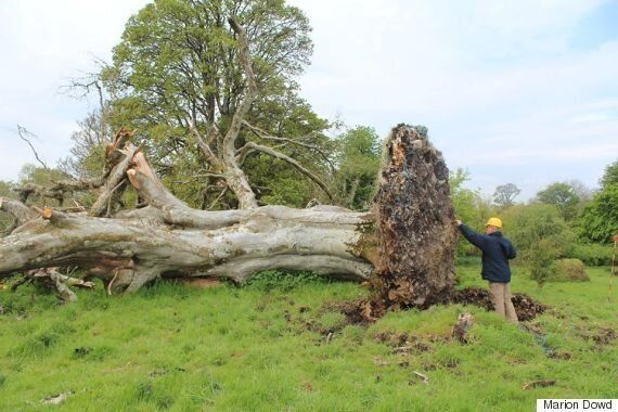 1,000-Year-Old Skeleton In Irish Town Of Collooney May Reveal Medieval