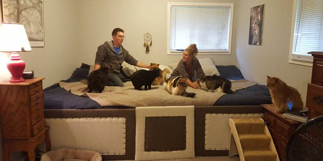 This Couple Built An 11 Foot Mega Bed So They Could Sleep With Their Cats And