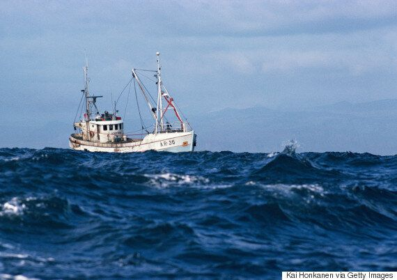 Marine Life Has HALVED In The Last 40 Years Says WWF