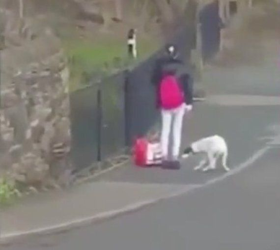 Dog In Care Of RSPCA After Woman Filmed Kicking And Hitting Animal In South