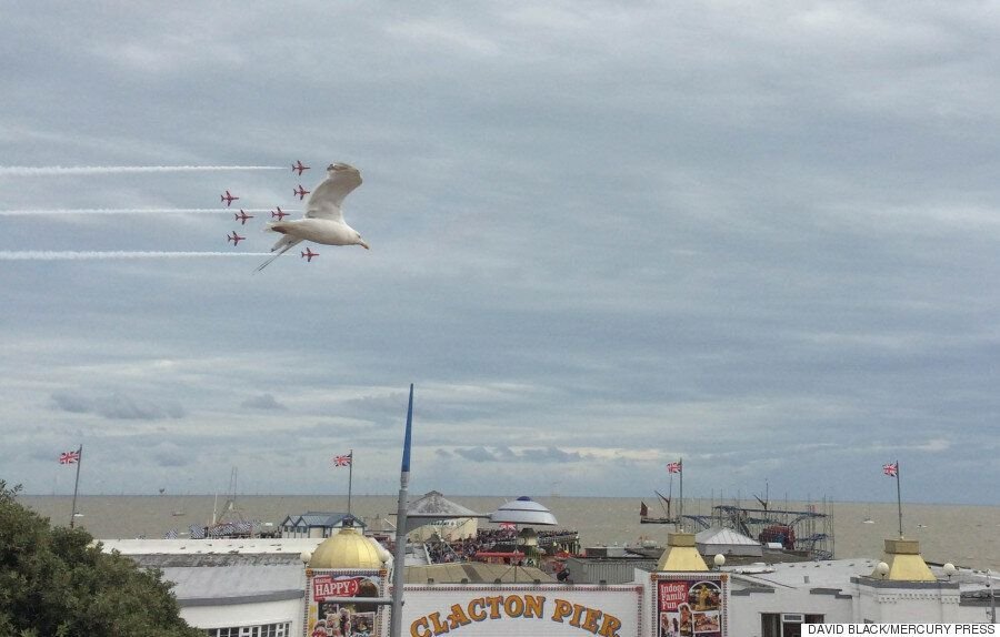 Seagull Photo-Bombs Red Arrows Flypast At Clacton Air Show, Making For A Beautiful