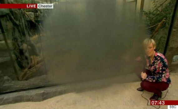 'BBC Breakfast' Cameramen Fail To Realise A Foggy Lens Can Be Easily Wiped With A Hankie, After Live