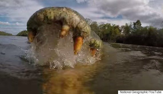 National Geographic Photographer Captures Stunning Video From Inside A Crocodile's