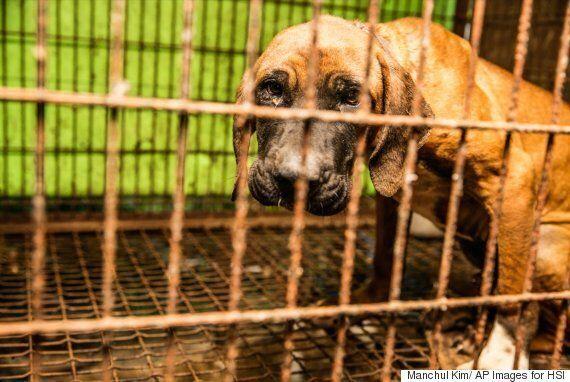 South Korea Dog Meat Farm Rescue By Humane Society