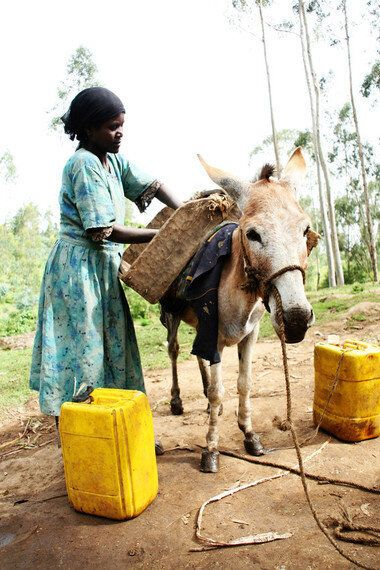 Invisible Helpers: How Donkeys Give Women a Better