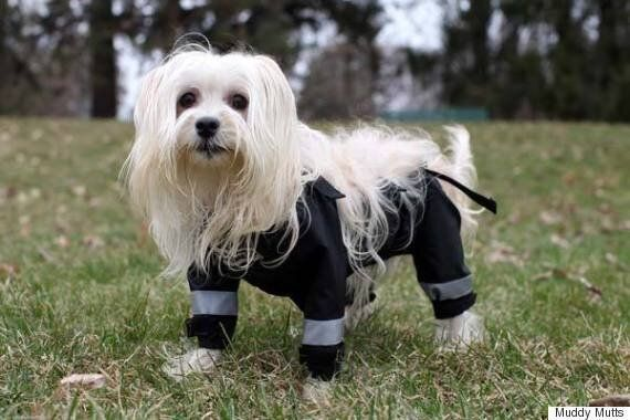 'How Would Dogs Wear Trousers' Argument Solved By Canadian