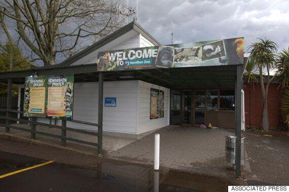 New Zealand Zoo Keeper Killed In Tiger Attack At Hamilton Visitor