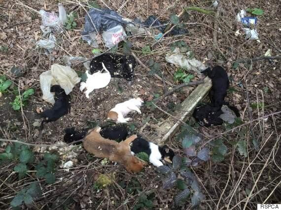 RSPCA Finds Dead 'Puppy Farm' Puppies In St Albans Country Lane,